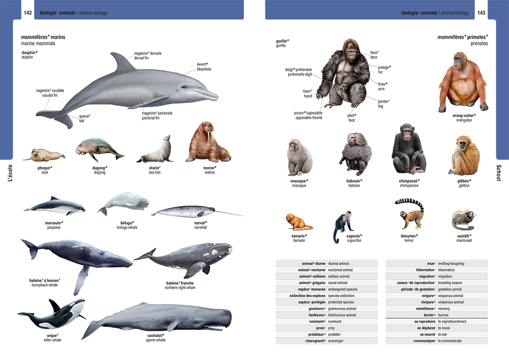 Children's reference - The Junior Visual Dictionary