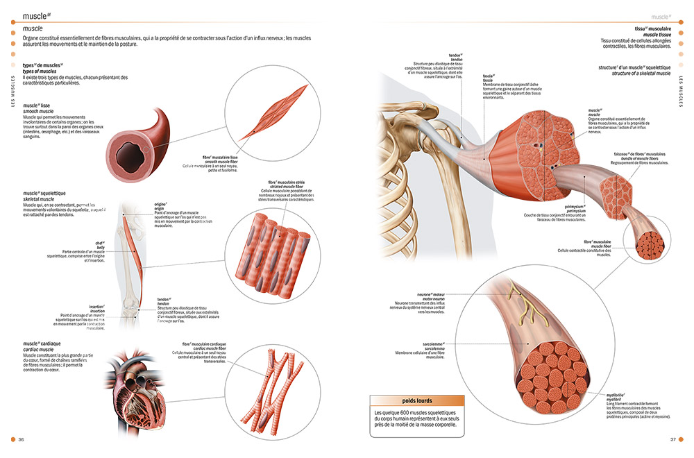 Health encyclopedias - The Visual Dictionary of the Human Body