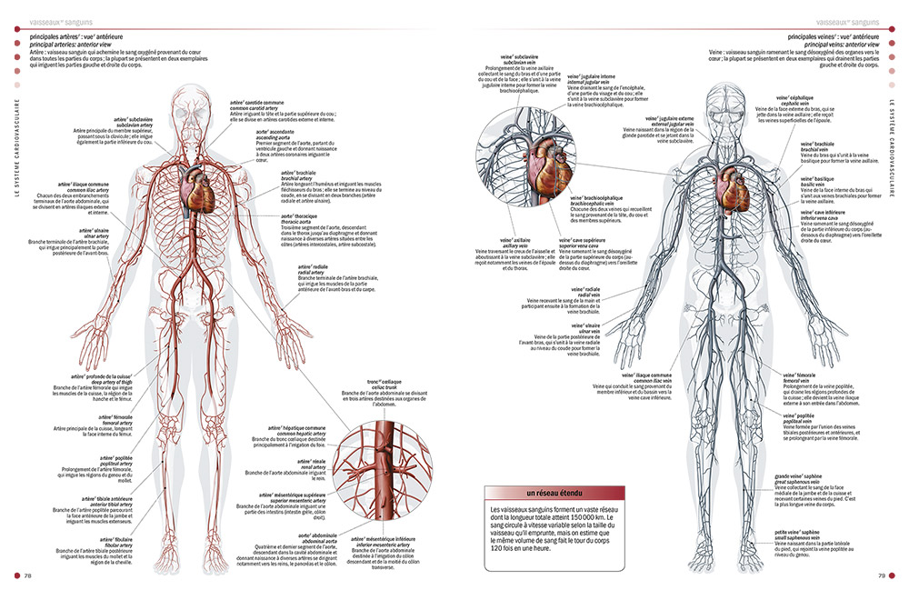 Health encyclopedias - The Visual Dictionary of the Human Body